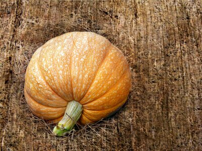 A healthy and organic big pumpkin on rustic background.