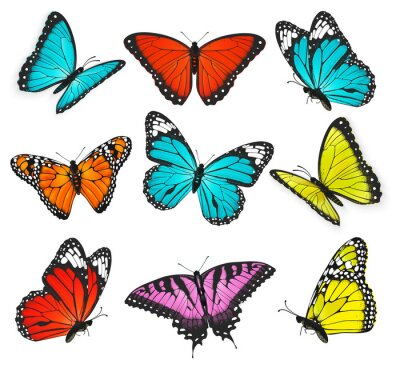 Canvas print a set of realistic colorful butterflies illustration