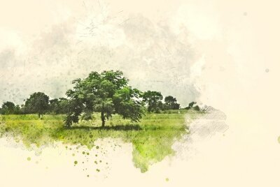 Canvas print Abstract tree and field landscape on watercolor illustration painting background.