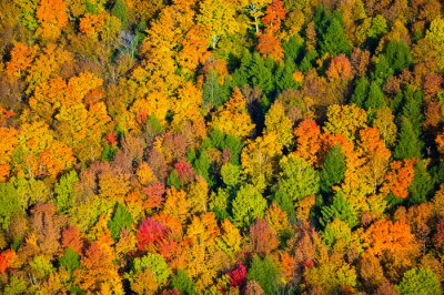 Canvas print Aerial view of fall foliage in Vermont.