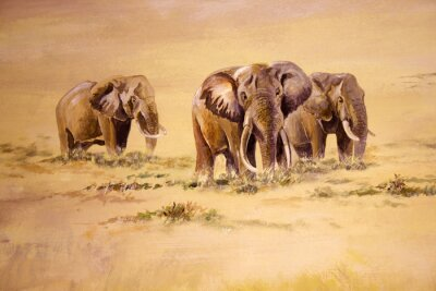 Canvas print African Elephant, South Africa