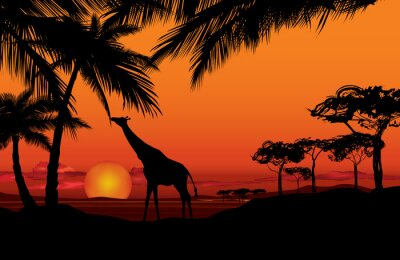 Canvas print African landscape with animal giraffe silhouette. Savanna nature sunset  background