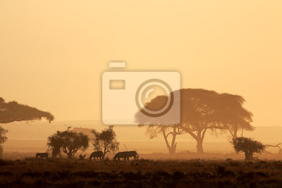 African sunset with silhouetted trees and plains zebras, Amboseli National Park, Kenya.