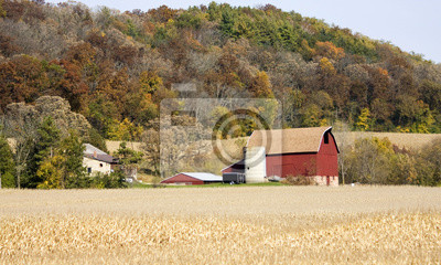 Agricultural background. Autumn rural landscape with typical Wisconsin red barn and farm buildings on a colorful forest background and ripe corn fiery on a blurry foreground. Midwest USA.