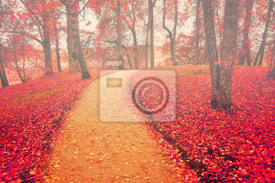 Alley in autumn with red fallen leaves - autumn landscape