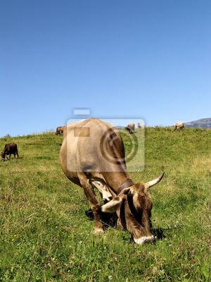 Allgäüer Kühe 1
