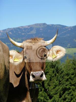 Allgäuer Kühe 11