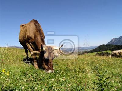 Allgäüer Kühe 2