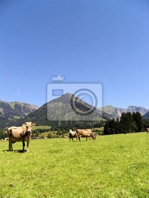 Allgäuer Kühe 22