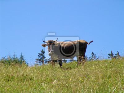 Allgäüer Kühe 3