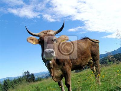 Allgäuer Kühe 53