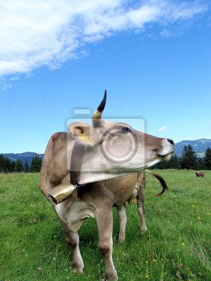 Allgäuer Kühe 57