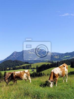 Allgäuer Kühe 58