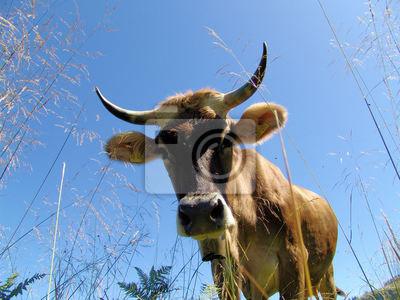 Allgäuer Kühe 8