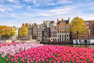 Canvas print Amsterdam Netherlands, city skyline Dutch house at canal waterfront with spring tulip flower