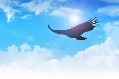 Canvas print An eagle flying in the air