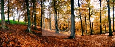 An iomage of yellow tree in autumn forest. Panorama
