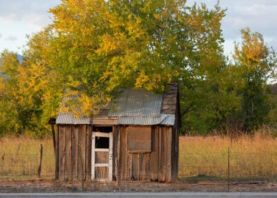 An old battered wooden shed with a tin roof sits under a tree with gold and green leaves blowing in the wind as summer turns to autumn.