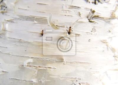 ants on a bark
