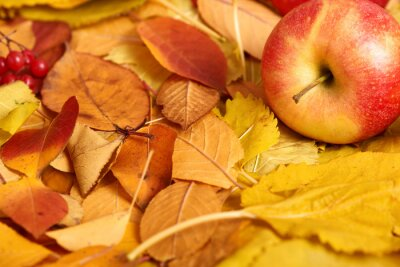 autumn background, red apple on yellow fallen leaves, abstract decoration in country style