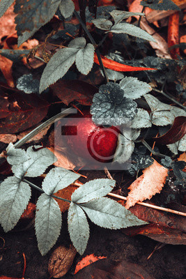 Canvas print autumn, fabulous red apple in leaves