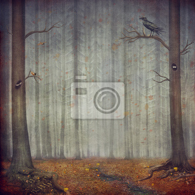 Canvas print Autumn forest . Beautiful nature background