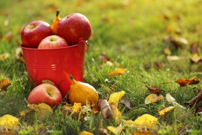 Autumn fruits. Autumn harvest. red apples in a pink bucket on a lawn with yellow leaves in the sunlight. Autumn season.