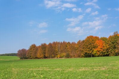 Autumn rural landscape with a forest