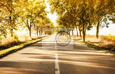 Autumn rural landscape with country road and gold trees along
