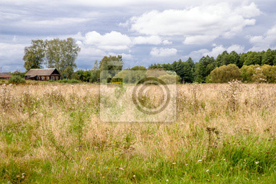 Autumn rural landscape with field and forest
