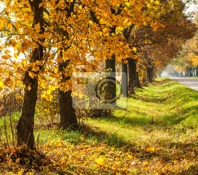 Autumn rural landscape with gold trees in a row