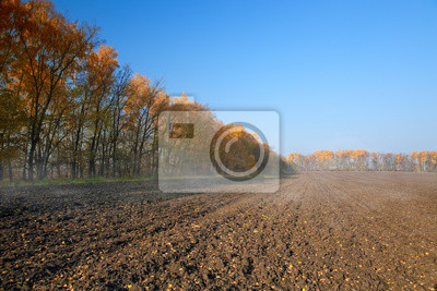 Autumn rural landscape with plowed field at morning mist