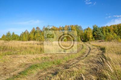 Autumn rural landscape with road