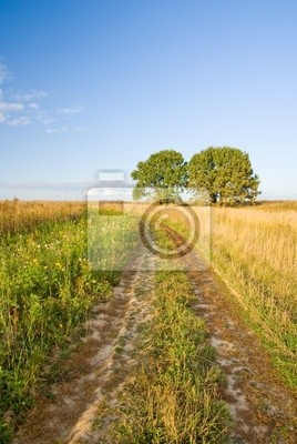 Autumn rural landscape with road and two trees