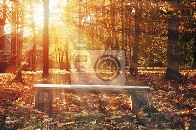 Autumn rural landscape with wooden bench under bright sunlight