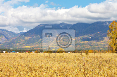 Autumn rural landscape with yellow oat field in foothill valley. The peaks of the Eastern Sayan Mountains are covered with low clouds. Beautiful seasonal background. Siberia, Buryatia, Tunka Valley