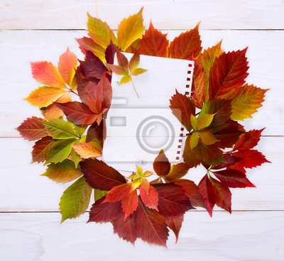 Autumn time: red grape leaves.