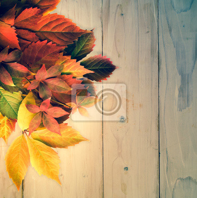 Autumn time: red grape leaves.Vintage effects.