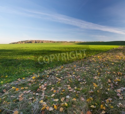 Autumnal rural landscape with fields of young corn and fallen colorful leaves.