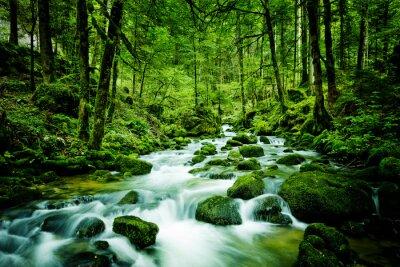 Canvas print Bach im Wald