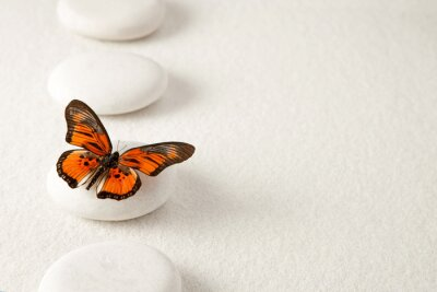 Canvas print Background with rocks and butterfly