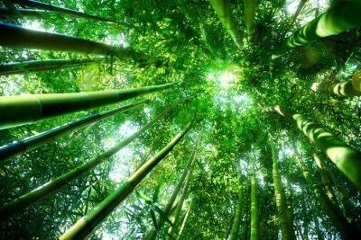 Canvas print bamboo forest - zen concept