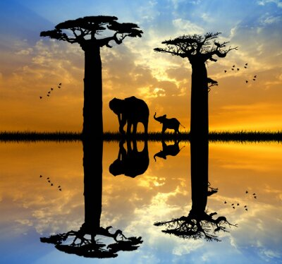 Canvas print Baobab and elephant at sunset
