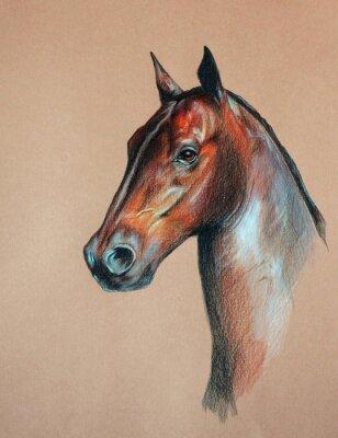 Canvas print bay horse head