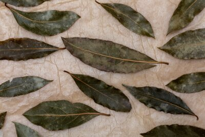 Bay leaves (laurel) as a background (spices collection). On rustic background.