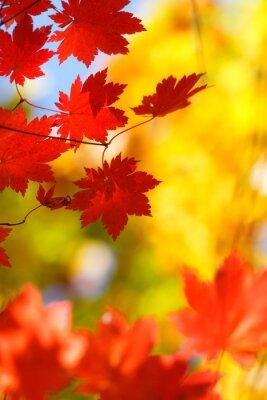 beautiful bright autumn season