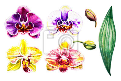 Beautiful colorful orchid flowers set. Watercolor painting. Exotic plant. Floral print. Botanical composition. Wedding and birthday. Greeting card. Flower painted background. Hand drawn illustration.