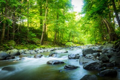Canvas print Beautiful dreamy mountain stream in the forest