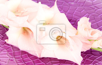 Beautiful gladiolus flower in water on purple background