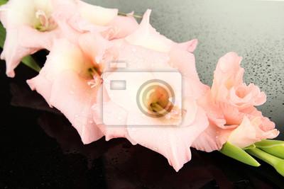 Beautiful gladiolus flower on black background